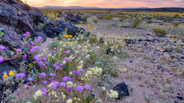 If you've been on Instagram, you've seen pictures of the superbloom, an intense display of wildflowers. This year is more intense because of all the rain.
