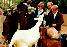 The Beach Boys, Goats and the 'Pet Sounds' Cover