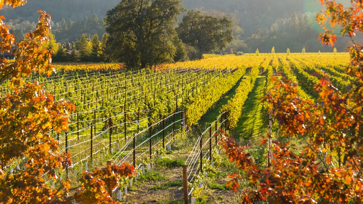 Harvard University has been buying thousands of acres of California vineyards. They're doing it way above market price.