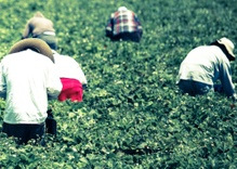 Mexico and Walmart Team Up to Improve Farmworker Conditions
