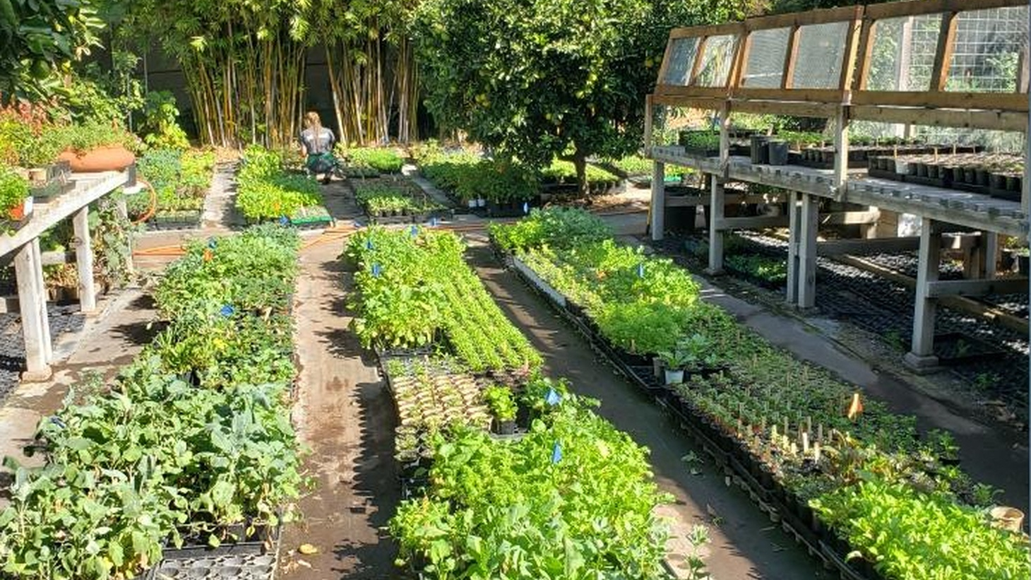 Logan's Gardens may be the only Black-owned nursery in Southern California. Evan Kleiman recommends buying healthy seedlings there.