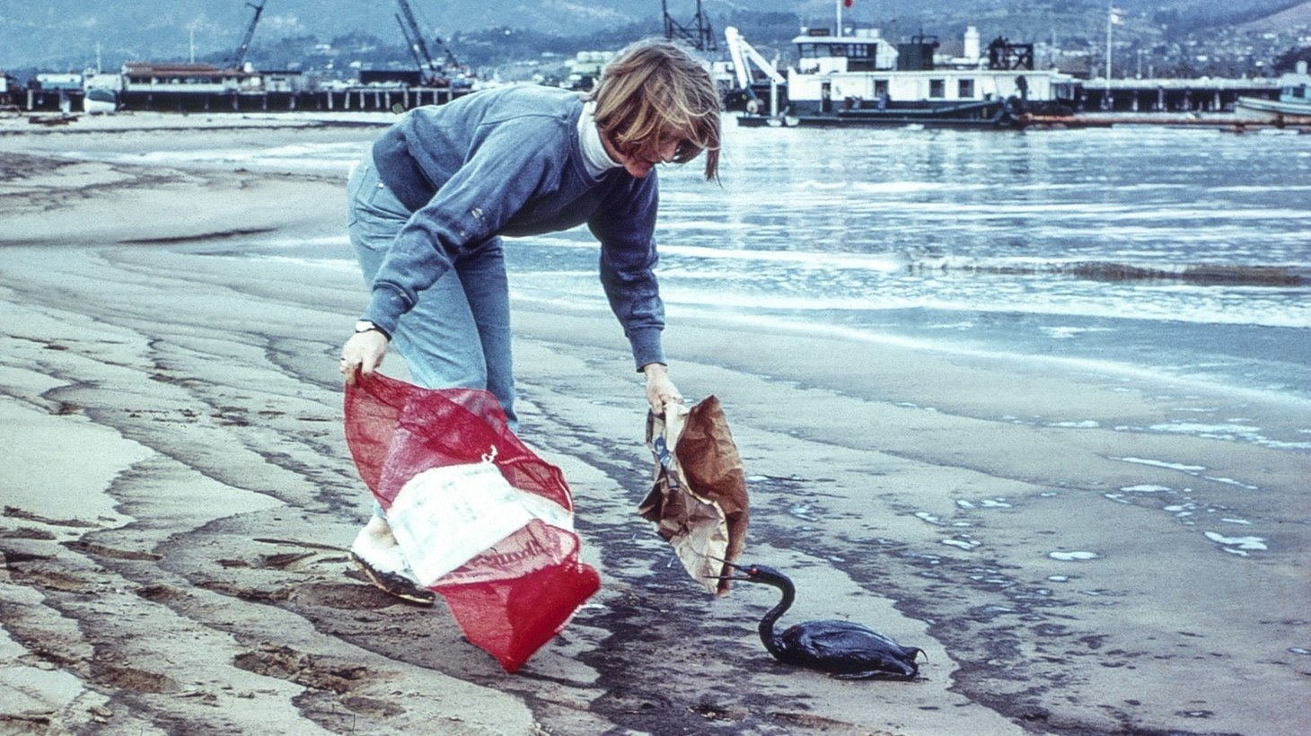 More than 3,600 seabirds died in the wake of the 1969 oil spill.