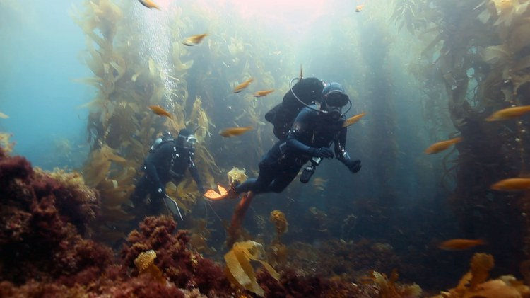 Many family members and friends have spoken publicly about the Conception fire victims' passion for diving and exploring ocean life.