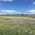 Where to spot stellar wildflowers along the Central Coast