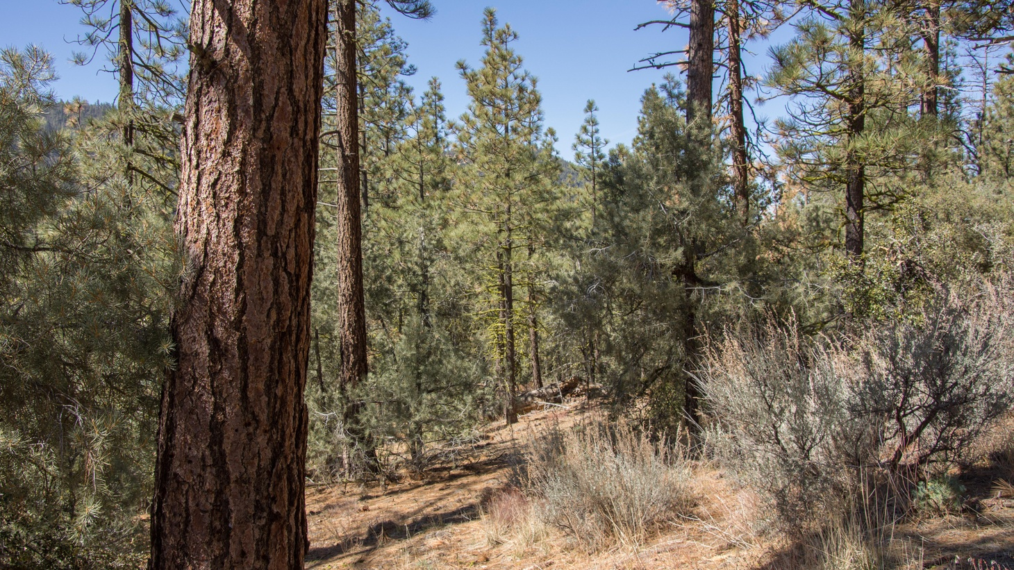 Officials with the Los Padres National Forest want to create fire breaks to protect communities from wildfires, but environmentalists worry about the harmful effects of commercial logging. Writer T.C.