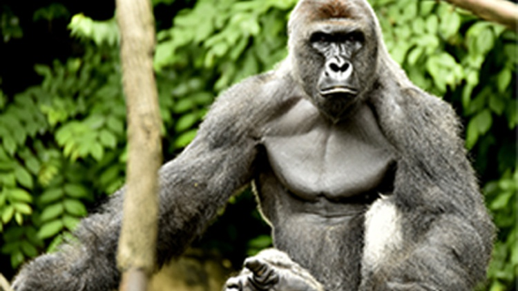 When a four-year-old boy breached a barrier at the Cincinnati Zoo, a 420-pound gorilla named Harambe took an interest in him and dragged him around.