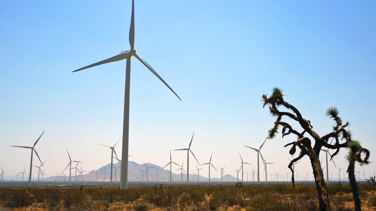 America's most powerful wind farm -- 1.5 gigawatts in size, enough to generate electricity for a city of millions -- is on the edge of the Mojave at the foot of the Tehachapi Pass, site of one of the earliest and still largest collections of windmills in the world. Altogether, there are more than 5,000 turbines in the area, and the newest and largest are nearly 500 feet to the tip of the blade.