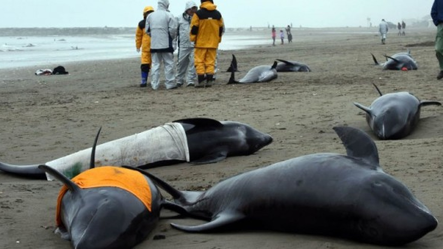 Dead dolphins washed ashore.