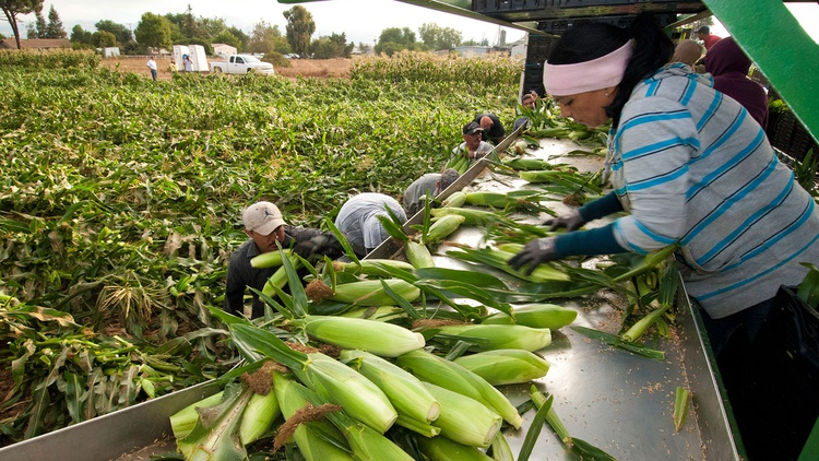 Will Governor Jerry Brown seize another opportunity to improve the lives of farmworkers?