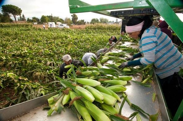 Farmworkers-BobNicholsUSDA.jpg