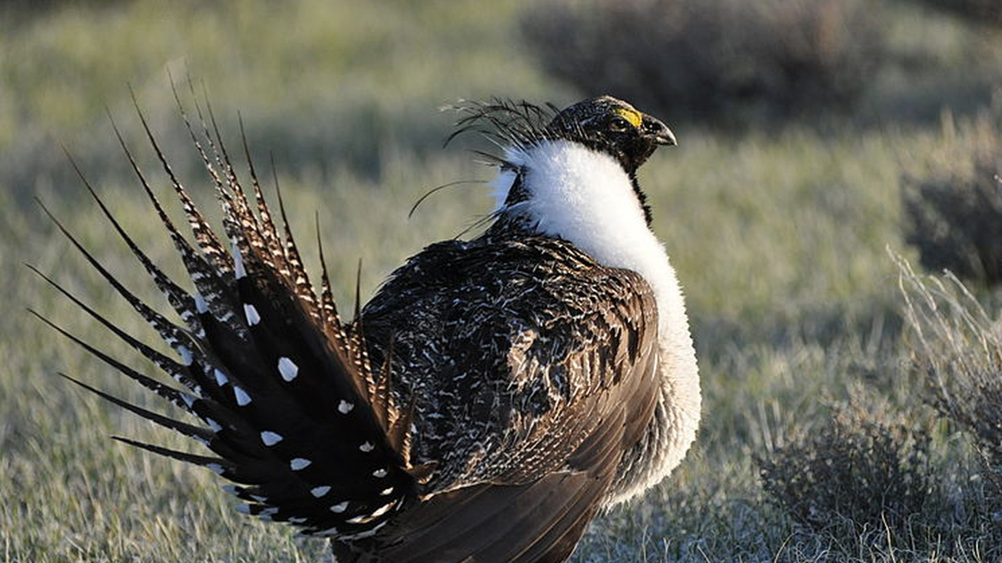 Photo by Jeannie Stafford/US Fish & Wildlife Service 
