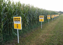 Superstition over Science in Europe's GMO Policy?