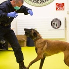 How dogs and tech can detect COVID-19