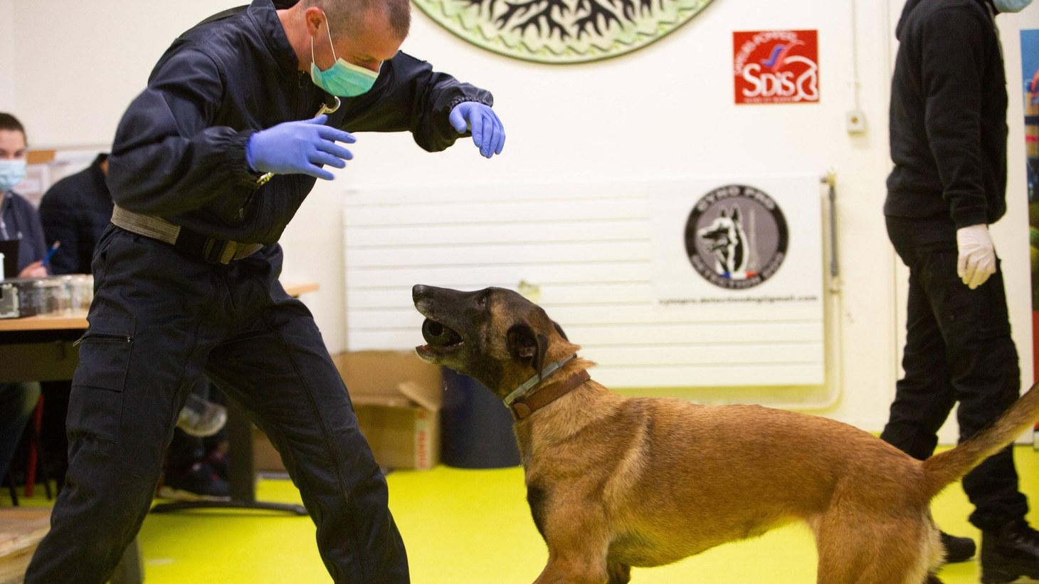 "Dogs are being trained to detect people infected with COVID-19 at the Ecole Veterinaire in Maisons-Alfort near Paris, France on May 12, 2020. COVID-19 appears to generate a specific odor that can be detected by specially trained dogs. There are traces of ""Catabolites"" induced by the virus, in urine, stool, tears, saliva and sweat."
