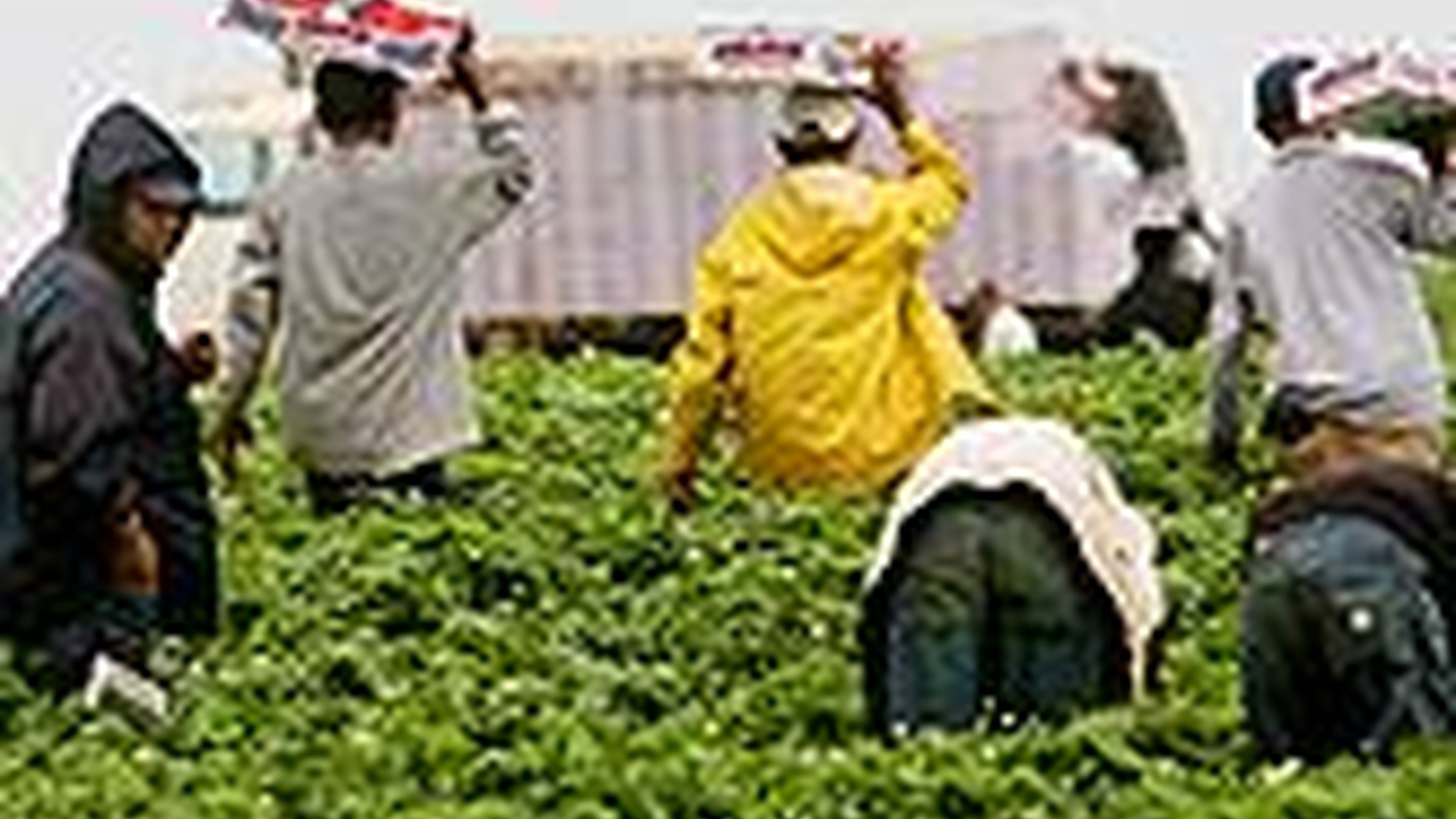 American farmers insist that immigration enforcement has dried up the supply of farm labor. Some are resorting to prison inmates and others are moving to Mexico. Also, Turkey recalls its ambassador over the Armenian genocide bill, plus Vice President Cheney and the expansion of executive power.