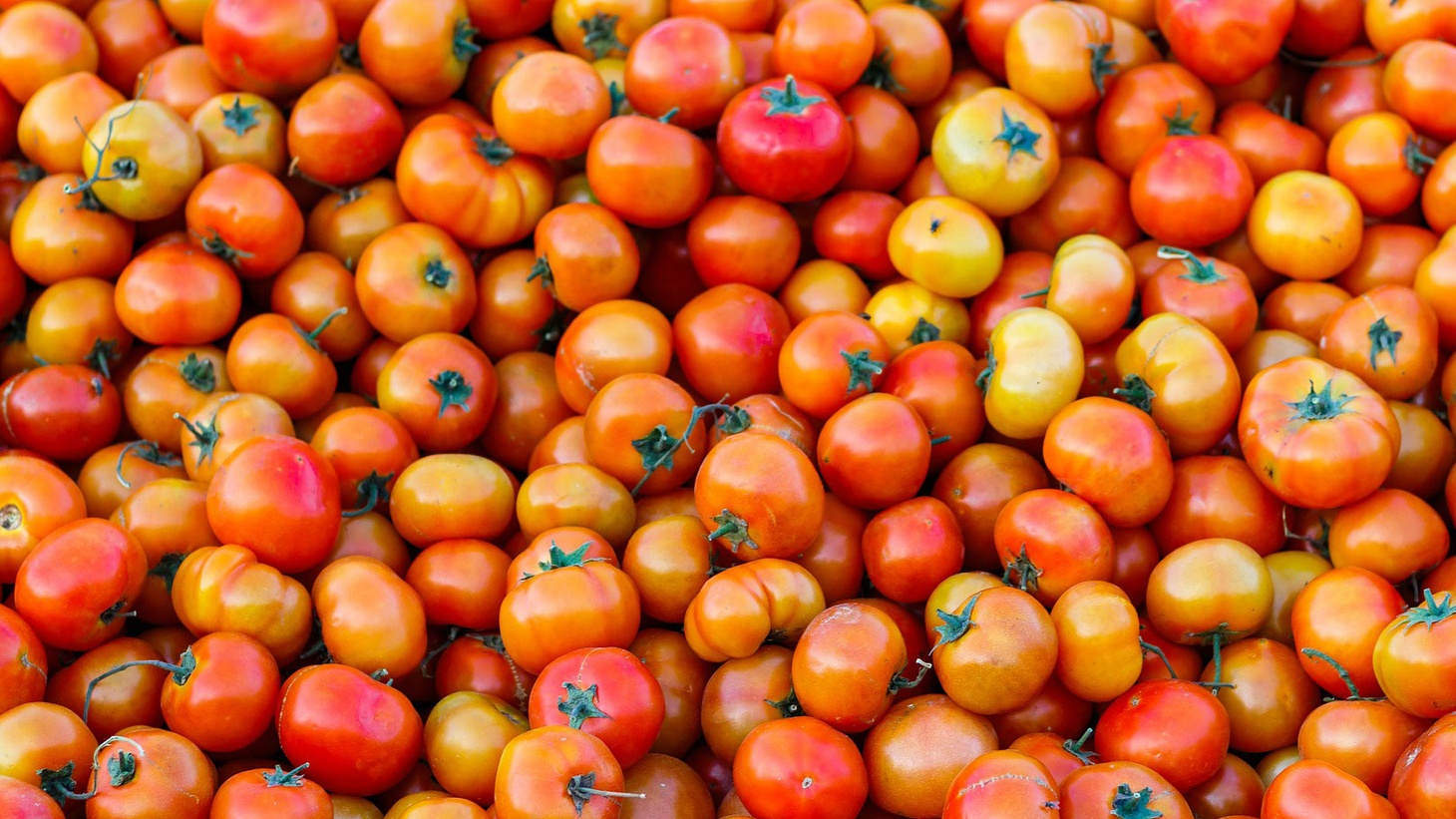 """Conditions for agricultural laborers in the US have been described by the UN as """"appalling."""" But tomato workers in Florida have won their freedom from virtual slave labor."""