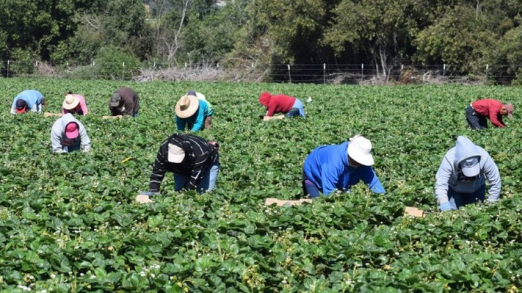 Coronavirus among farmworkers is a threat to America's food supply chain. Are these workers being protected?