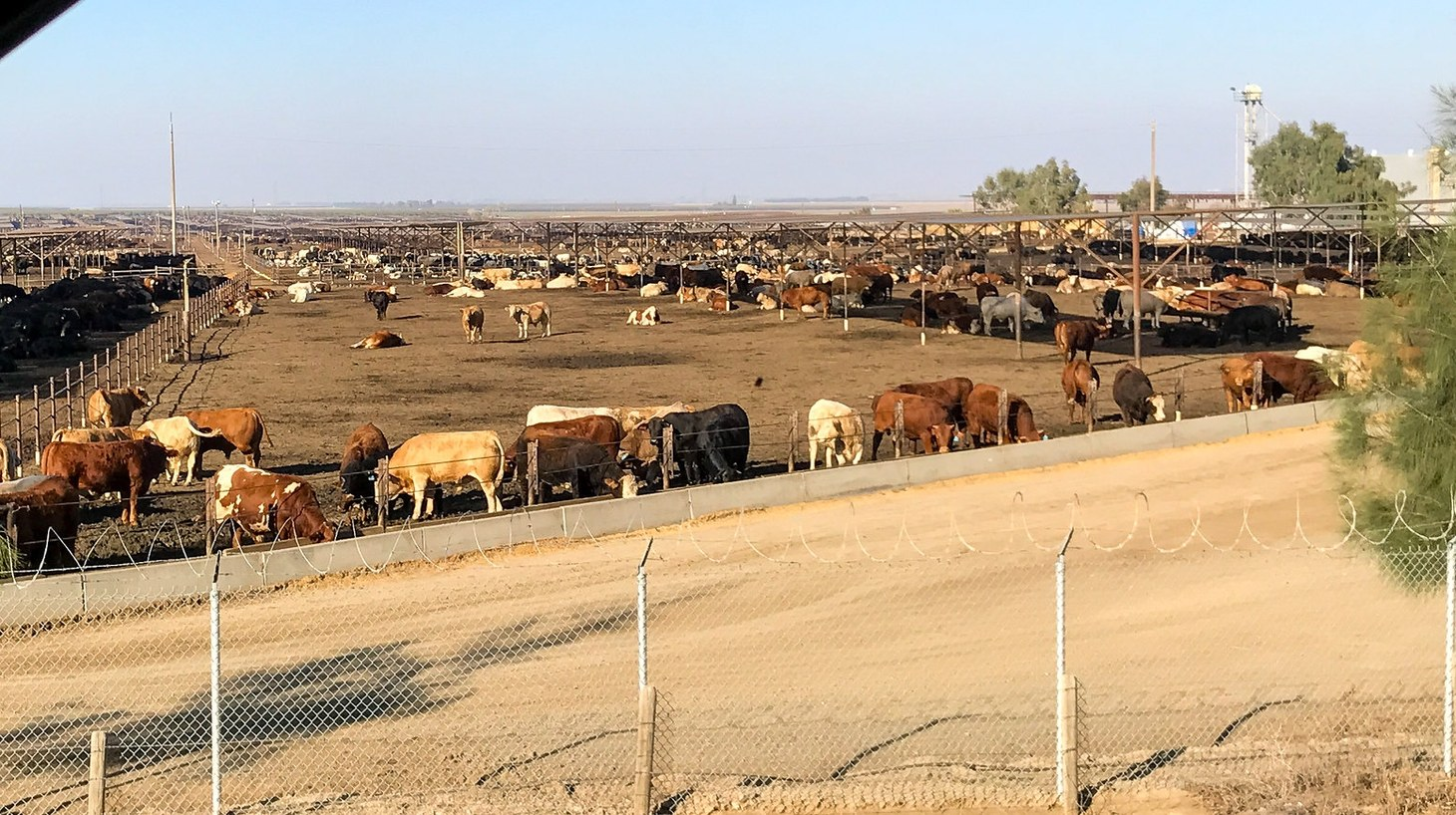 Harris Feeding Company. Cattle feed lot along I-5 in California's Central Valley