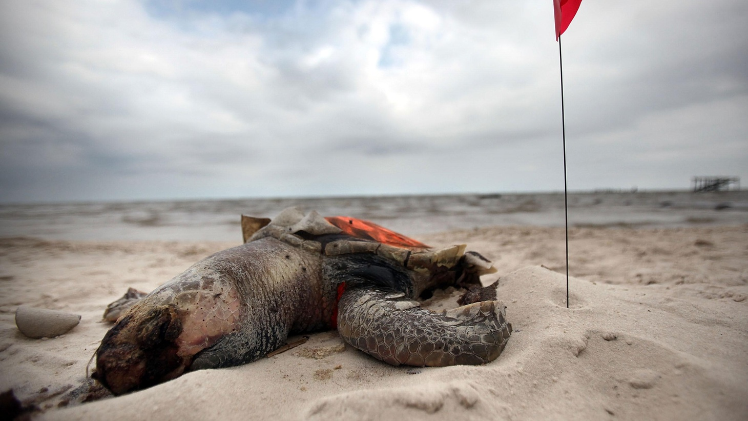 One year after the worst oil spill in US history, what's the condition of the environment, the economy and the culture from Louisiana to Florida?