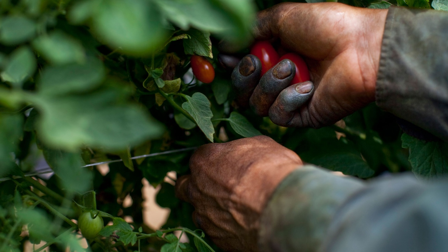 Fruits and vegetables from Mexico are cheap and plentiful in the United States, but a recent investigation shows Mexican agribusiness treating the produce better than the workers who grow it and bring in the harvest. Are Mexico's labor laws being enforced?