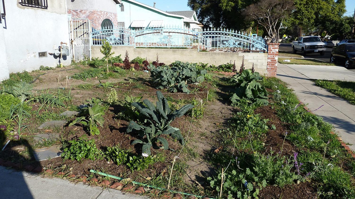 In South LA, Rob Finley planted a garden for himself. It grew on the city-owned strip of land, and Finley was ordered to desist.  Lopez found that nothing has changed.