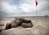 The Gulf Oil Spill, One Year Later
