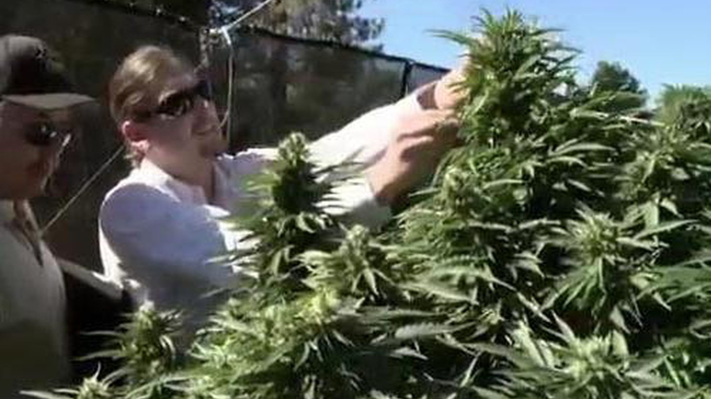 In Mendocino County, federal agents have raided a medical marijuana farm that's legal under state law. Also, Billy Chrystal and the Oscars, and Italy's teetering economy.