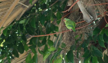 green-parrot.jpg