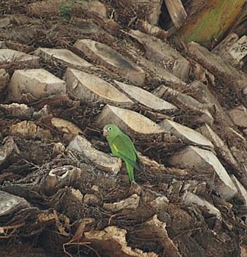 parrot-in-palm-2.jpg