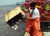 The Gulf Oil Spill: The Environment, the Economy and the Politics