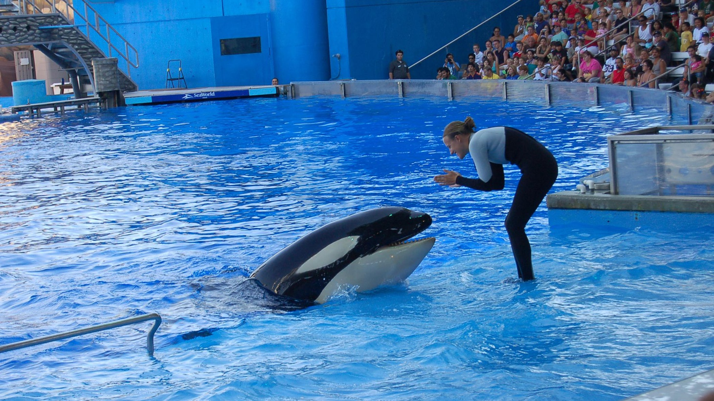 "After watching the heart-wrenching film ""Blackfish,"" a state assemblyman wants to ban keeping of killer whales in captivity for human entertainment."