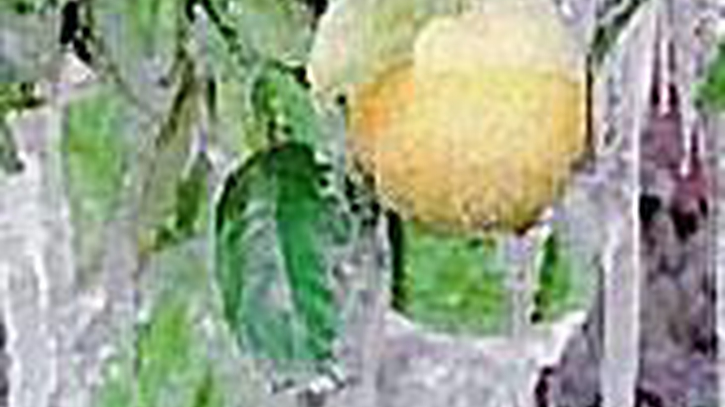 This week's record cold-snap in California has reached areas that are usually immune to freezing. That's bad news for leafy greens, avocados, strawberries and blueberries. But the crop hardest hit appears to be oranges. We update the damage and look at the importance of oranges to the history of California. Plus, tomorrow's the deadline for billionaires--or anyone else--to bid for the Los Angeles Times.