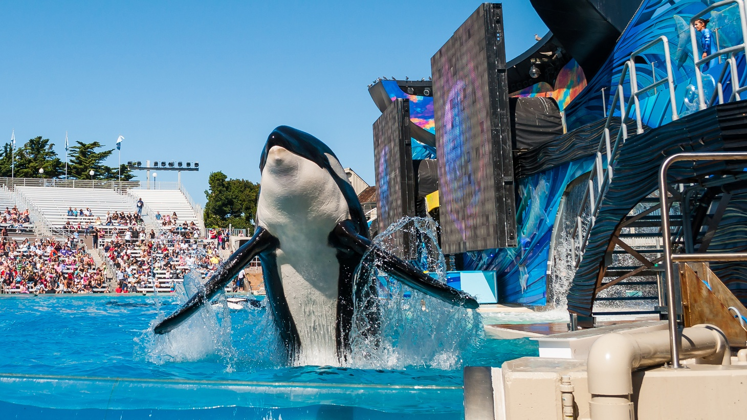 The Coastal Commission has approved bigger tanks for 11 killer whales at a cost of $100 million. That sounds like a victory for Sea World in San Diego -- but the Commission rejected both a captive breeding program and the introduction of any new orcas. Does Sea World have a future?