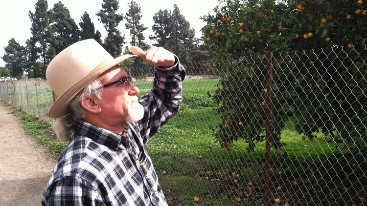 "One hundred years ago, orange groves were described as ""a second gold rush"" in California, and they helped add to local prosperity and population growth."